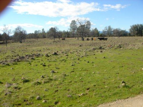 Swede Creek Ranch - Shasta County – Palo Cedro, CA - Photo 6