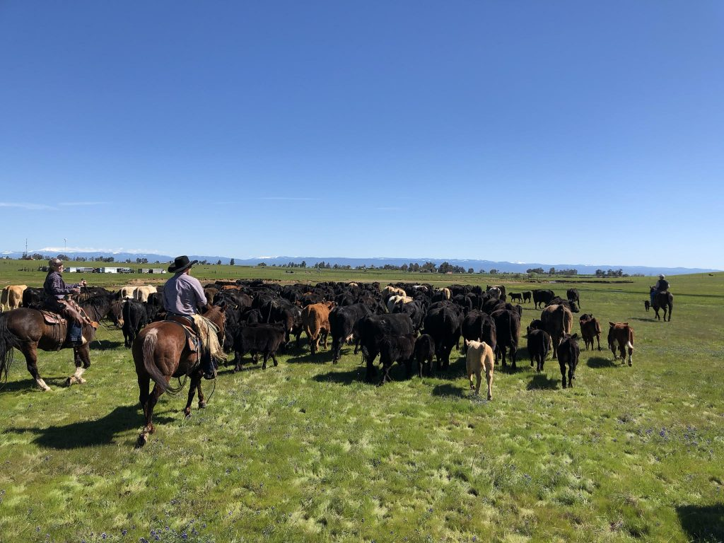 how to run a cattle ranch