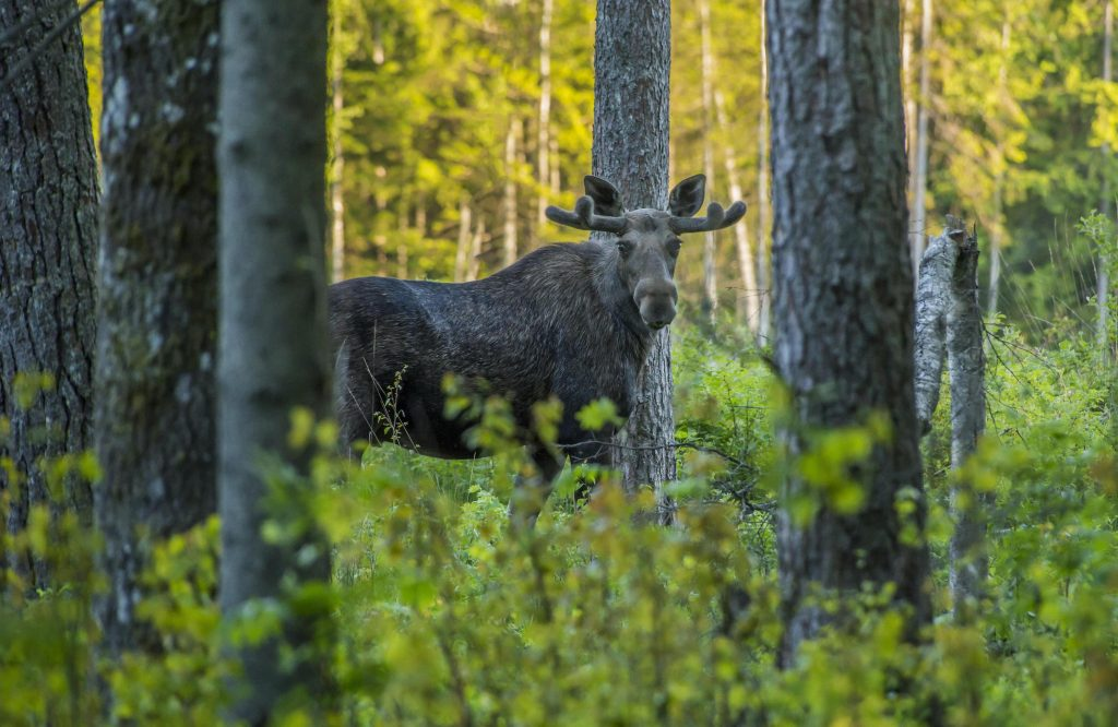 What to Know When Buying Hunting Land